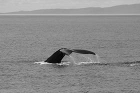 Spectacular Whale Watching